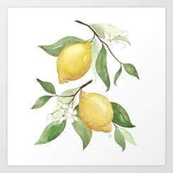Red Oak Lemon Tree